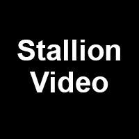 Stallion Video Profile Picture