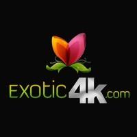 Exotic4K Profile Picture